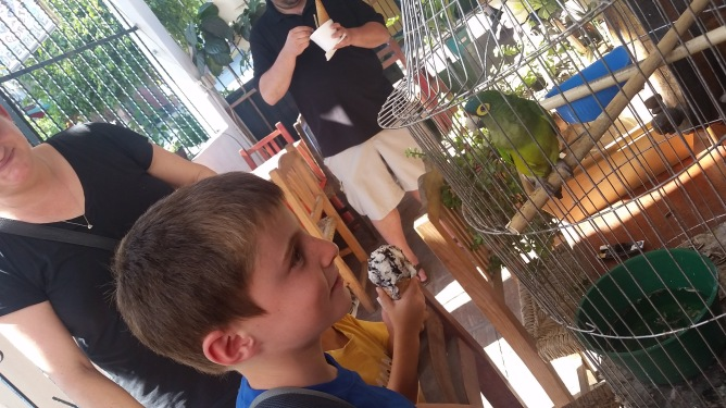 The boys loving some pajaros in town