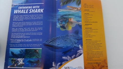 That time we swam with whale sharks in the wild